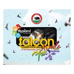 Amur Falcon Conservation Week 8th -10th November every year - Tourism - Govt. of Nagaland